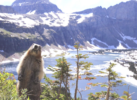 Glacier National Park Tours, Hotels, Location, Restaurants, Webcams, Lodging, Camping - Travel Guide in USA