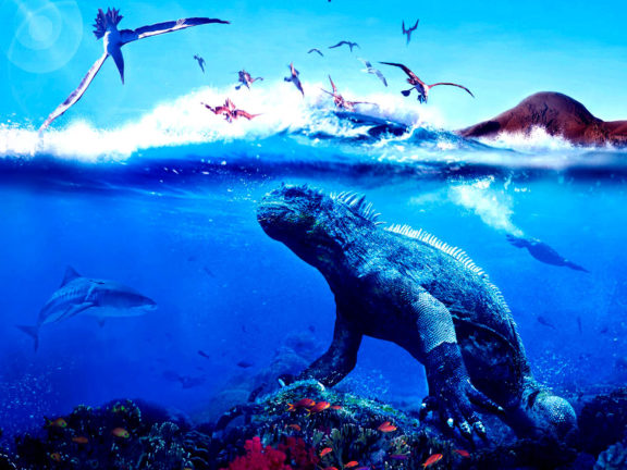 Galapagos Islands Tours, Weather, Hotels, Location, Map, Restaurants & Things to Do - Travel Guide in USA